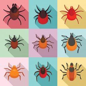 أفضل الطرق للتخلص من الحشرات شركة المروه